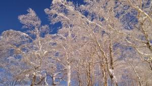 20150126_名寄スキー場
